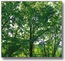 育毛剤 黄金樹  天然成分を配合☆